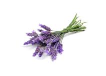 lavender_flower_2131ff2e-3f00-44fa-8e1b-3008637a7d46_800x